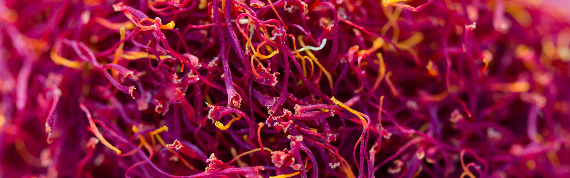 Saffron threads, credit Greg Elms and North East Tourism